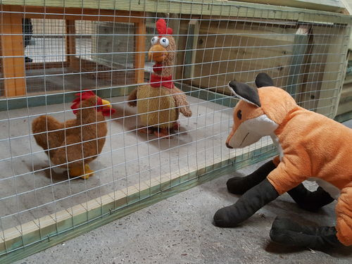 Keeping Poultry Protected From Foxes