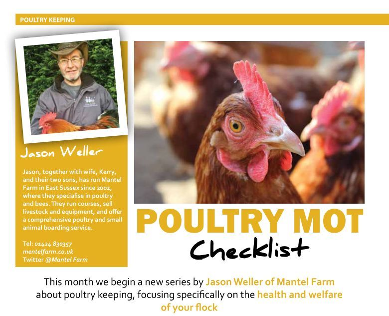 poultry keeping - home farmer article - chicken mot page 1
