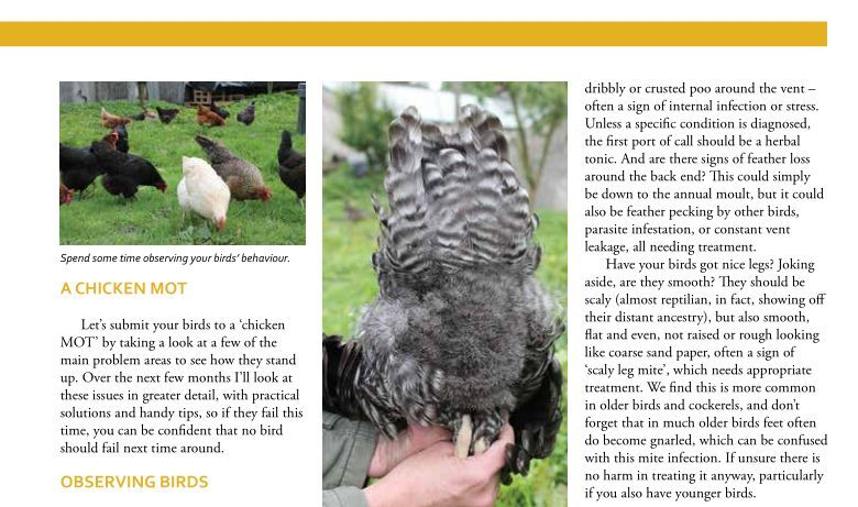 poultry keeping - home farmer article - chicken mot page 3
