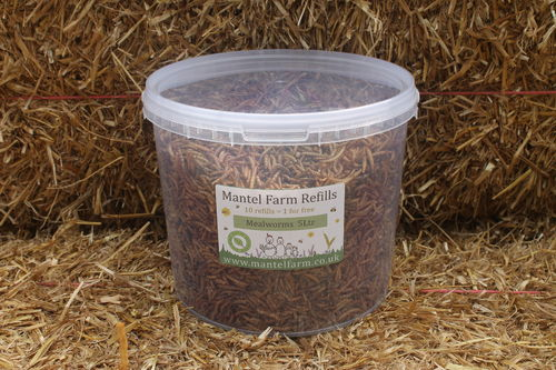Mealworms 5Ltr