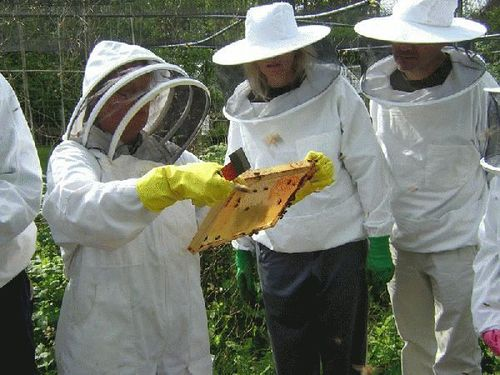 Beekeeping Suit Round Hat White