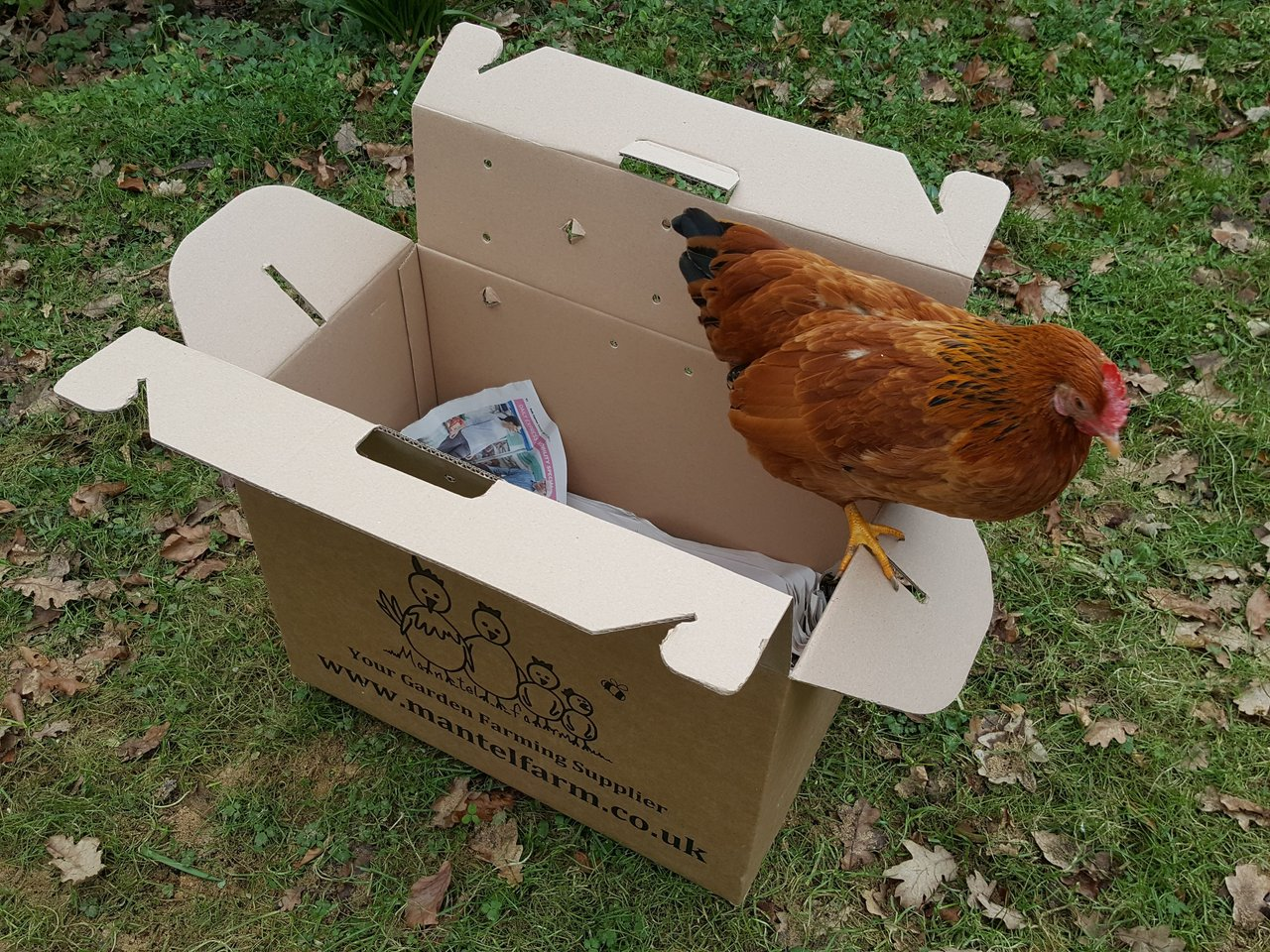 Animal Carrier Strong Cardboard Poultry For Sale