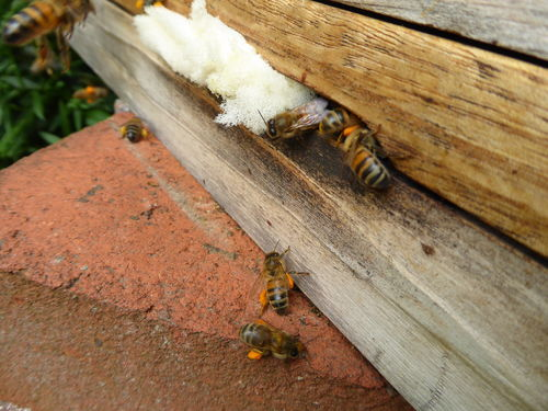 Amanda's Beekeeping Notes October 2017