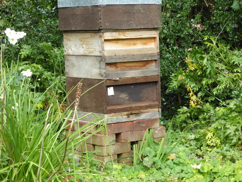 Amanda's Beekeeping Notes September 2017