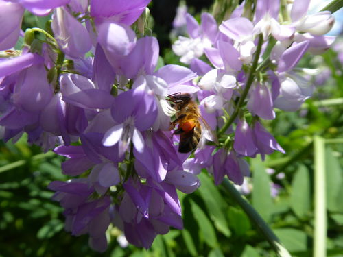 Amanda's Beekeeping Notes August 2017