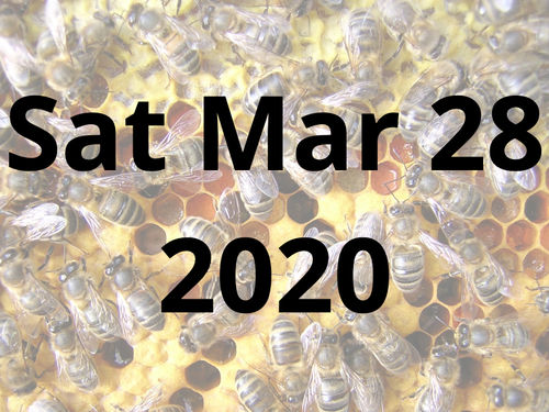 A Beekeeping Experience Day with Amanda Millar - Sat 28th March 2020