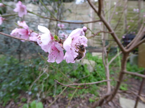Amanda's Beekeeping Notes April 2019