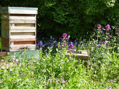 Amanda's Beekeeping Notes May 2019