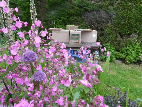 Amanda's Beekeeping Notes June 2019