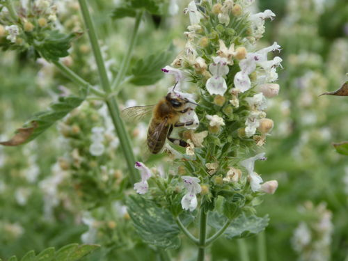Amanda's Beekeeping Notes August 2019