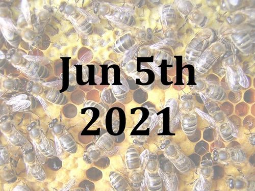 A Beekeeping Taster Day with Jill and Josh - Sat 5th June 2021