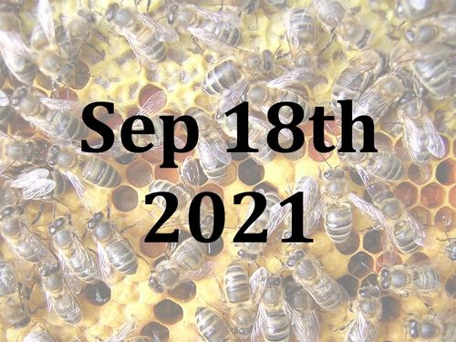 A Beekeeping Taster Day with Jill and Josh - Sat 18th September 2021