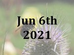 A Bumblebee Experience Day with Dr Nikki Gammons - Sunday 6th June 2021