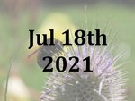 A Bumblebee Experience Day with Dr Nikki Gammons - Sun 18th July 2021