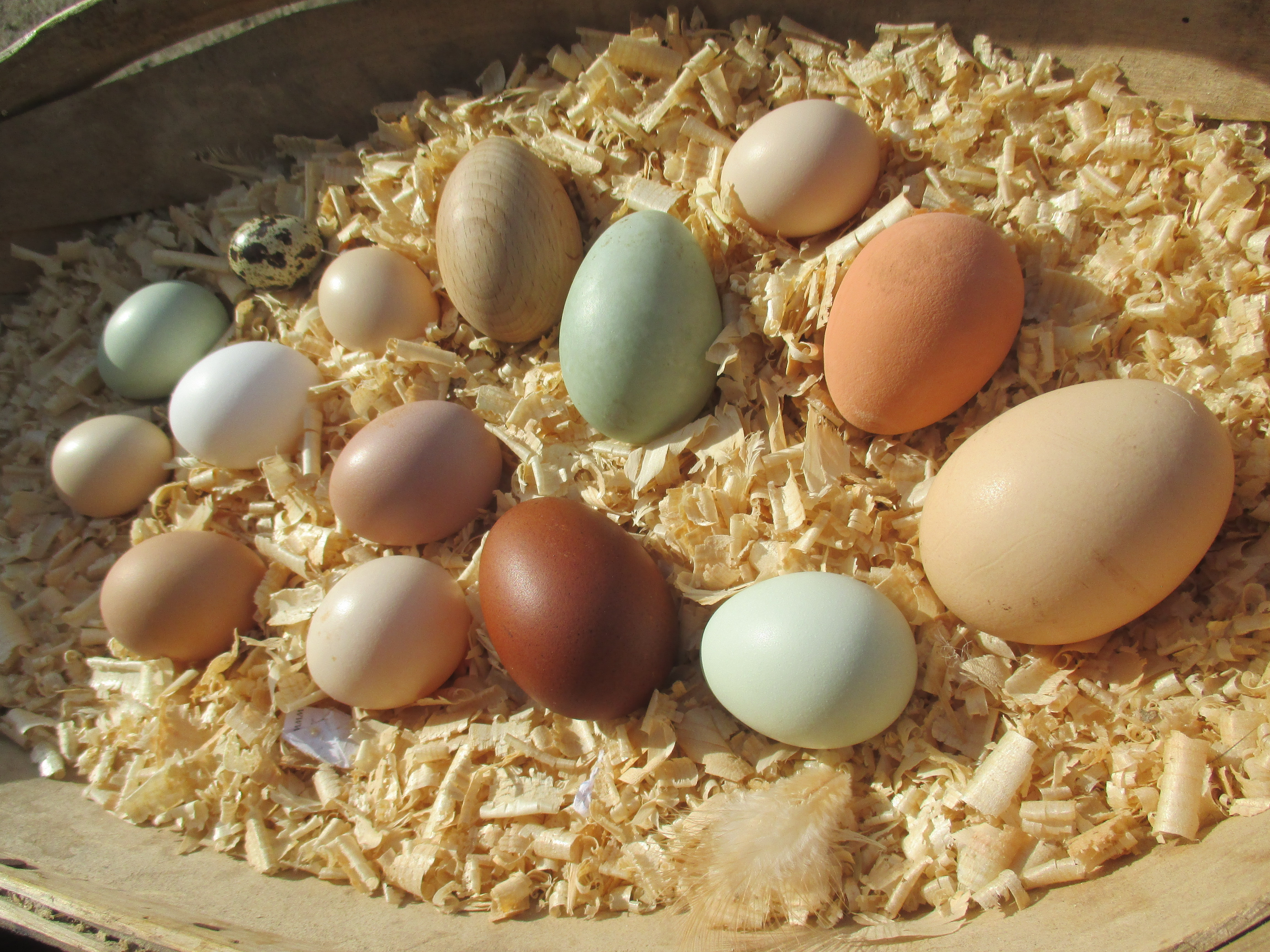Eggs_-_all_colours_and_sizes
