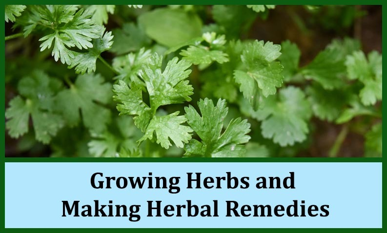 Growing_Herbs_and_Making_Herbal_Remedies