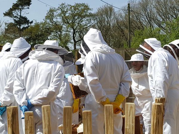 Beekeeping Experience Day Course