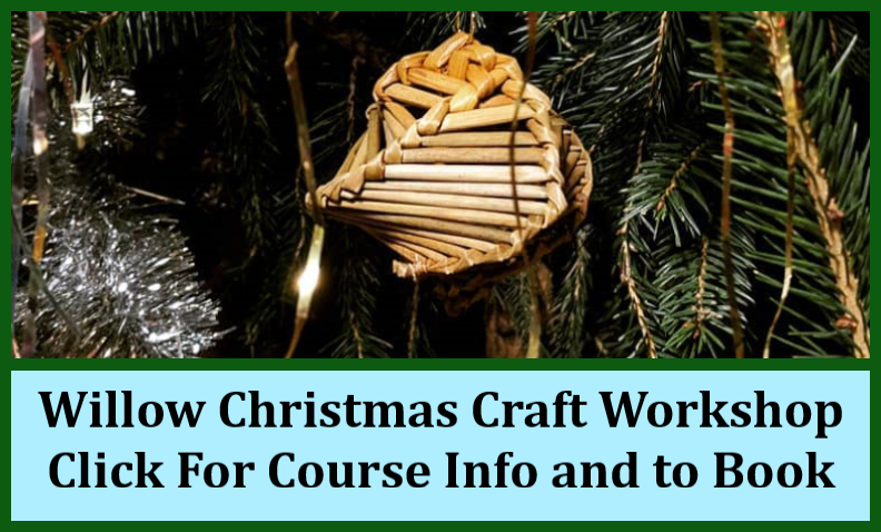 cat_Christmas_Willow_course