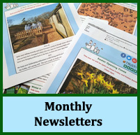 news-monthly-newsletters