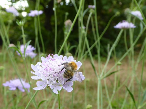 Amanda's Beekeeping Notes For August