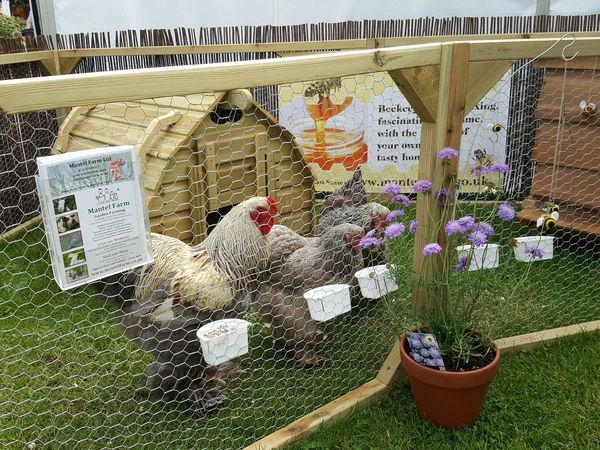 south of england show pictures